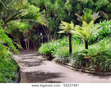 Park Walkway Surrounded By Palms