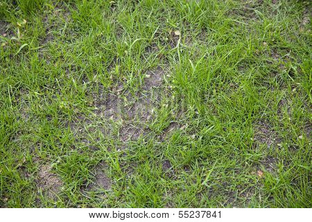 Newly Seeded Grass Lawn