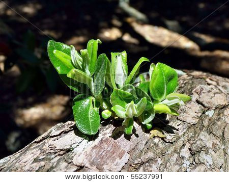 Green Plant Growin On A Tree Trunk