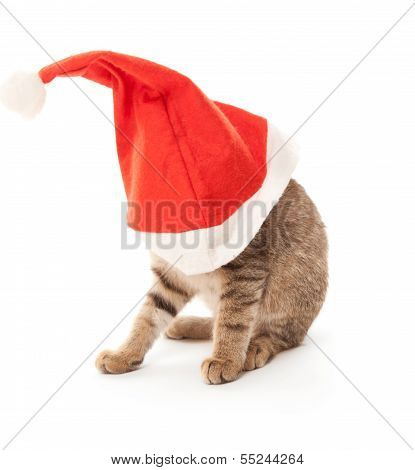 Cat stuck at Santa's hat on white poster