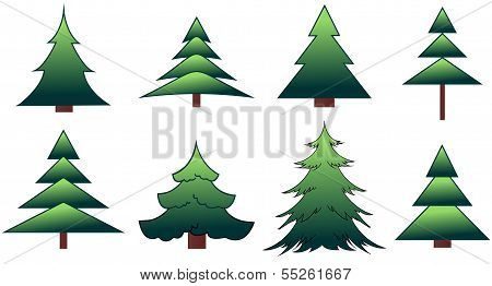 The set of the fir-trees and pines in vector