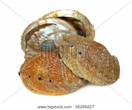 Four Abalone Shells
