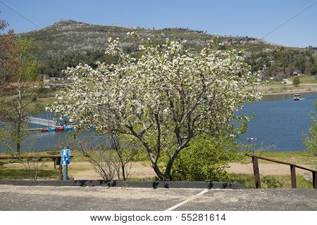 Spring on Cuyamaca lake, California