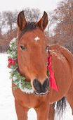 Red bay horse wearing a Christmas wreath on a cold winter day poster