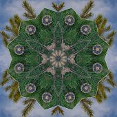 Pine cones and evergreen boughs combine to make a symmetrical design. poster