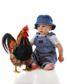 A year-old baby in overalls and a cap looking skeptically at a big rooster. Isolated on white. poster