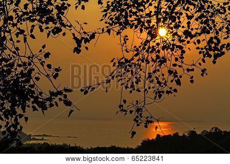 The Sunset Blacklight