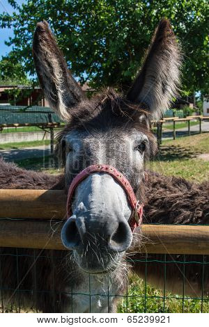 Donkey From The Farm