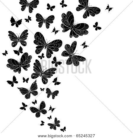 Flowing curving design of flying butterflies