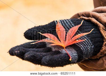 Autumn Leaves On Black Glove