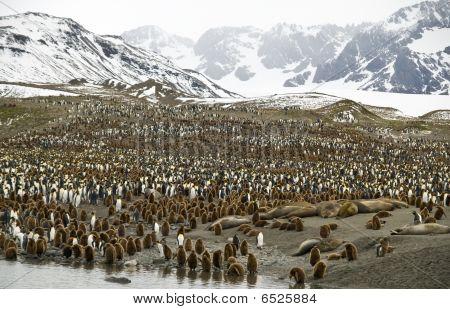 überfüllten Täler Pinguine, Süd-Georgien