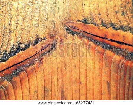 Unique Wet Wood Texture Close up