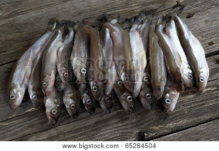 Crude Shallow Saltwater Fish - Smelt.