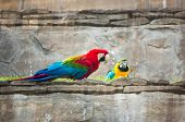 Pair of parrot with red beak poster
