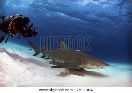 Diver With Lemon Shark