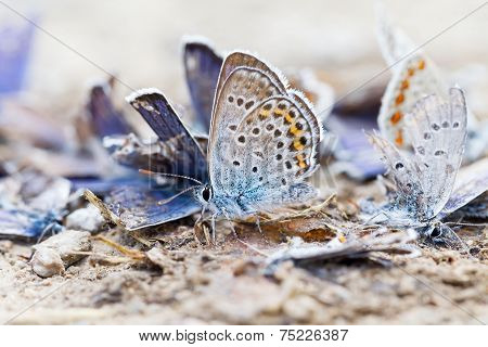 Close up photo of destroyed butterfly family poster