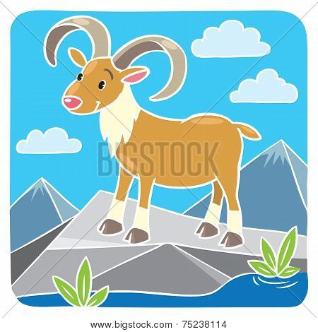 Funny Wild Urial Or Ram