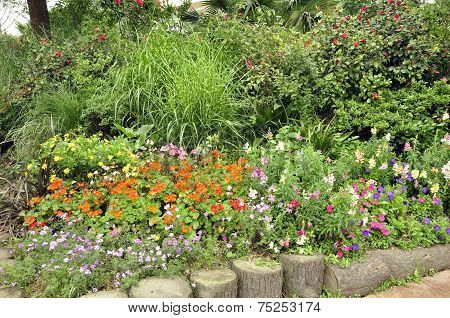 Various plants and flowers