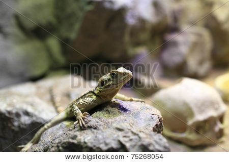 Chinese Water Dragon On Stone