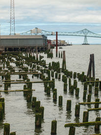 Abandoned Algae Covered Pier Logs With Astoria Bridge