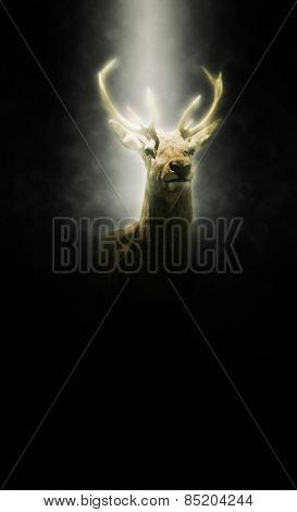 Proud stag illuminated in a beam of light shining down from the heavens through the darkness illuminating its head and antlers