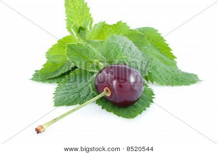 Fresh Green Spearmint  And Cherry