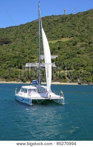 Heads Explorer Catamaran Day Cruises