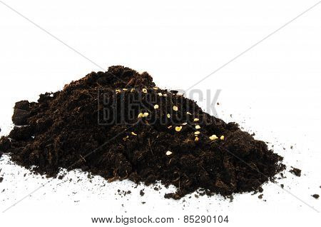 bell pepper seeds in some soil