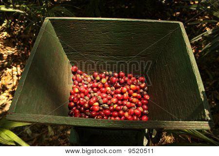Organic Coffee Beans.