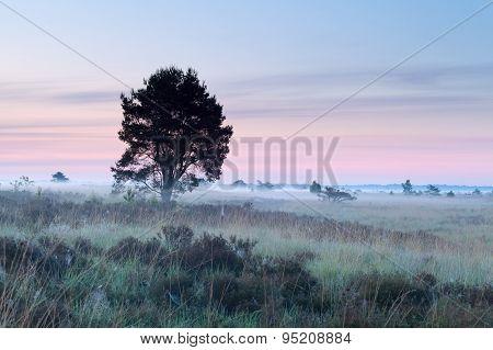 Tree On Marsh During Misty Morning