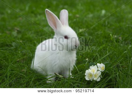 little white bunny sitting in green grass with flower