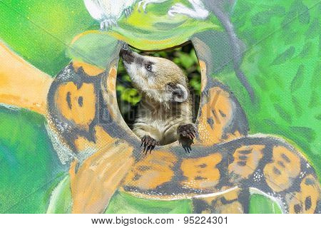 Baby Coati On A Painted Wall