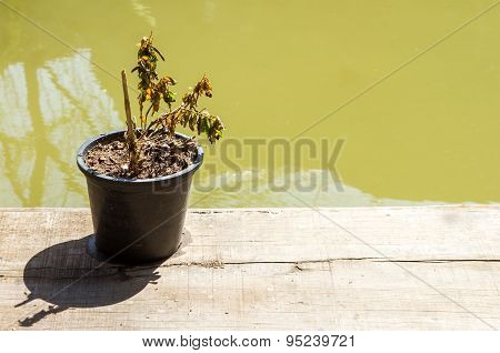 Dry Plant On Wooden.