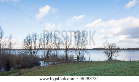 Bare Trees At The River Banks