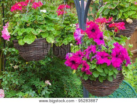 Hanging Baskets With Purple Petunias