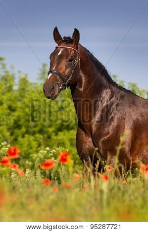 Horse portrait in flowers