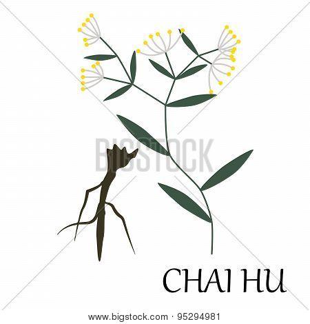 chai hu herb