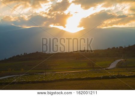 Sheep In The Pasture at sunset light countryside rural landscape
