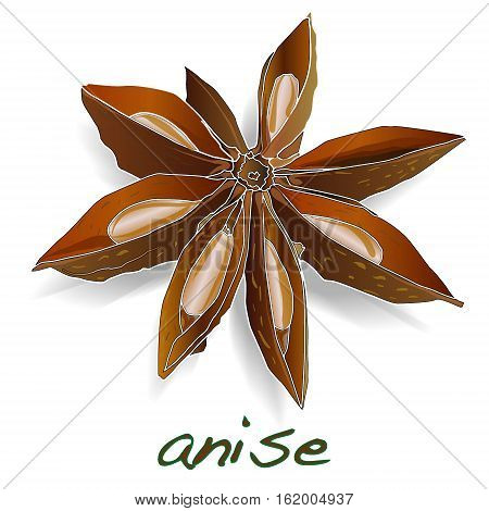 Star anise spice fruit and seeds isolated on white background