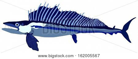 Lancet Fish lives is ocean and under deep blue water life one of top sea predators