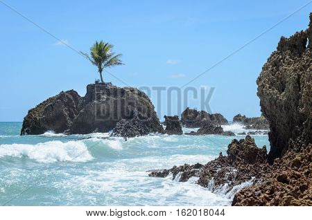 Mini Island With A Single Coconut Tree Surrounded By Sea Water And Some Rock Formations In A Paradis