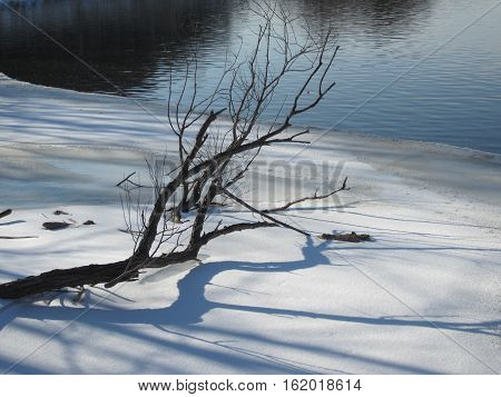 Late winter scenic image of a fallen tree branch on a snow-covered riverbank with a full-sized shadow below,  blue sky above, and open water in the background on this sunny day in Wisconsin, USA.