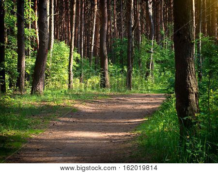 Walkway Lane Path With Green Trees in Forest. Beautiful Alley road In Park. Pathway Through Summer Forest.
