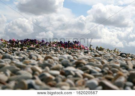 rocks flowers and sky