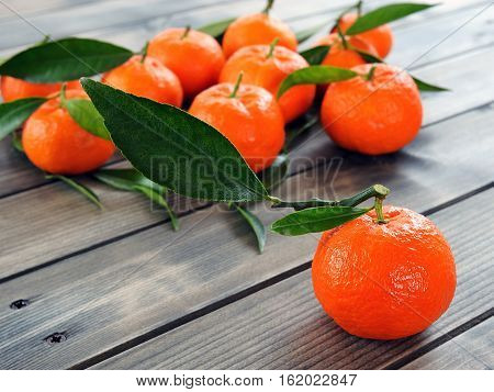 Fresh Clementines Organic Farming, On Wooden Base