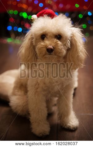 portrait of cute puppy with santa claus hat and christmas bokeh lights on background