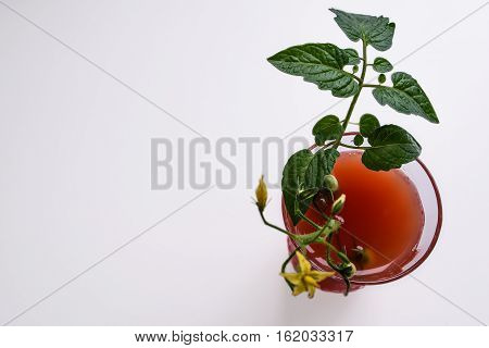 glass of tomato juice, tomatoes and leaves