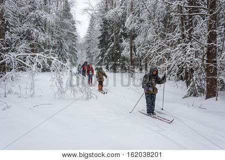 Komsomolsk district Ivanovo region Russia - 22 February 2016: Group of tourists in a ski hike in the beautiful snowy woods 22 February 2016 Komsomolsk district Ivanovo region Russia.