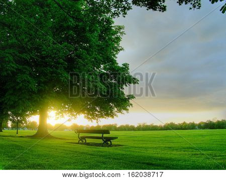 large tree with full of greenery and lovely garden