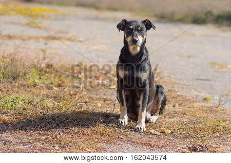 Stray mother dog sitting under warm autumnal sun